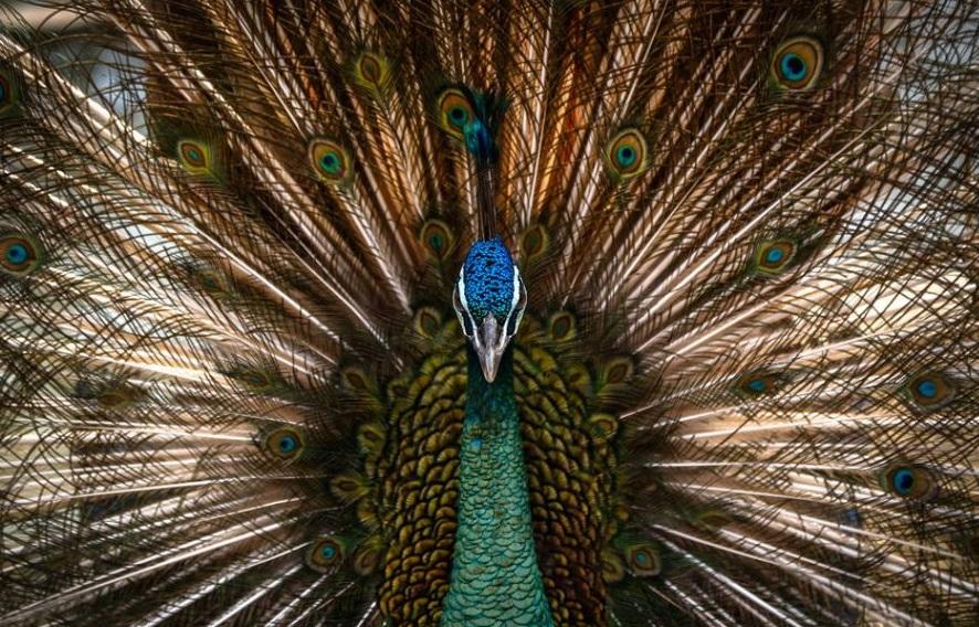 تماشای فلامینگو، جغد شاخ دار، طاووس و صدها پرنده در «باغ پرندگان تهران»