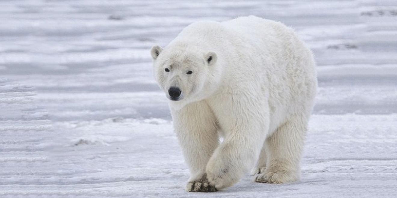 خطرناکترین حیوانات دنیا