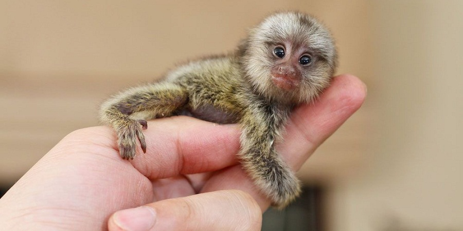 کوچک ترین پستانداران دنیا
