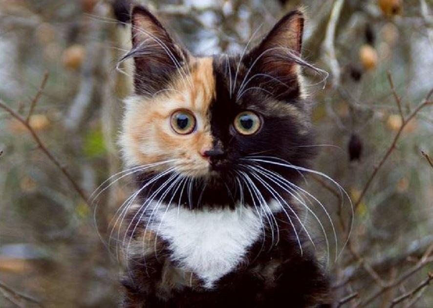 چرا گربهها رفتارهای عجیبی از خود نشان می دهند؟