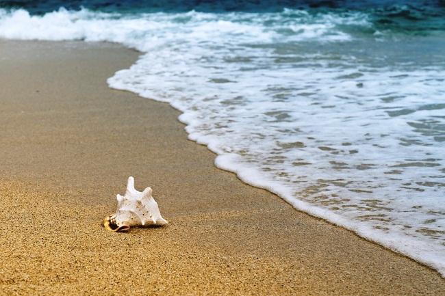 بیماری های ساحل دریا