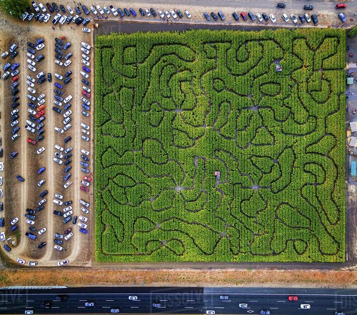 باغ های هزارتو