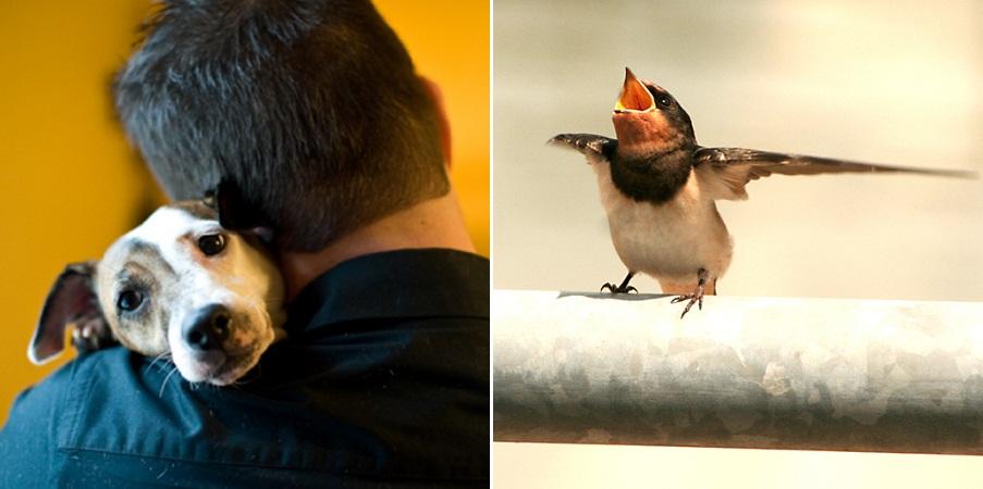 از سگ های عاشق تا پرنده های مست؛ حقایقی جالب و خواندنی درباره دنیای طبیعت
