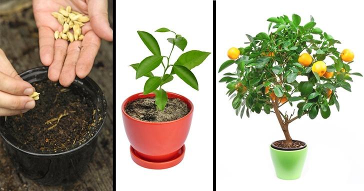 پرورش میوه در گلدان