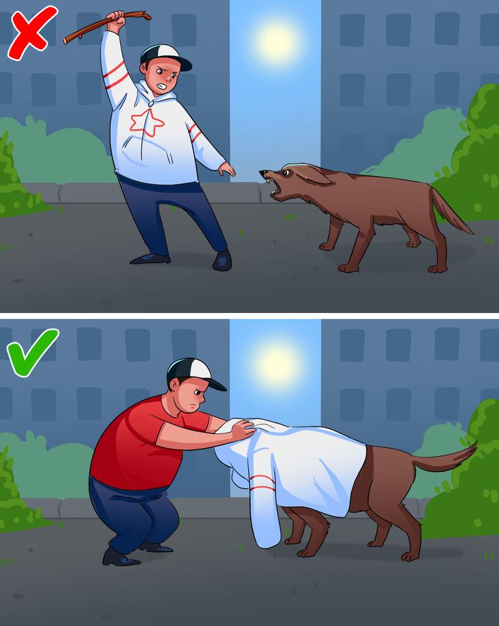 اگر  سگ ولگردی به ما حمله کند چطور باید جان خود را نجات دهیم؟