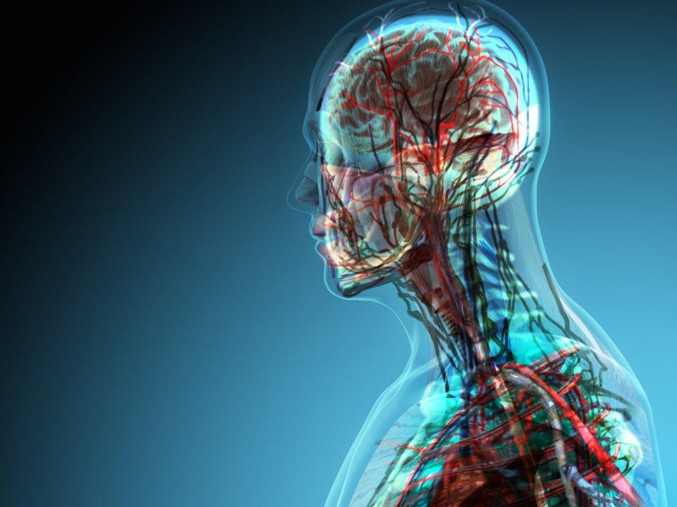 بزرگترین اندام بدن چیست؟
