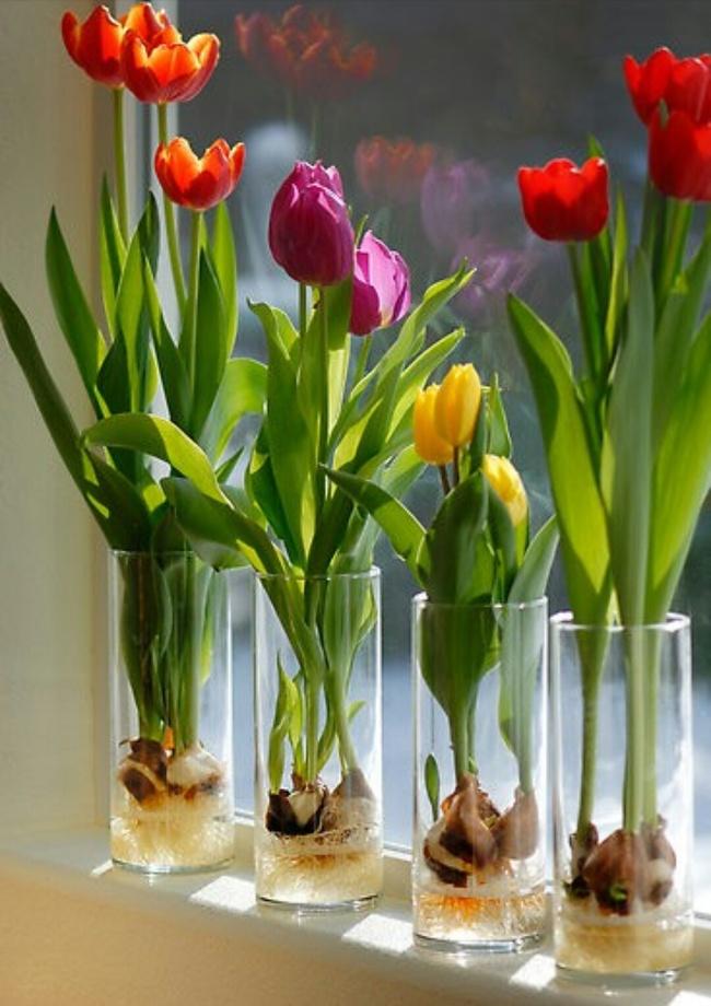 گل و گیاهان آپارتمانی
