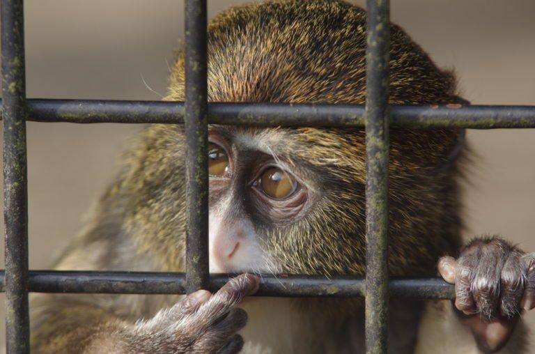 حیوانات خانگی گران قیمت