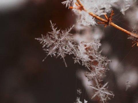 واقعیت جالب و عجیب در مورد برف