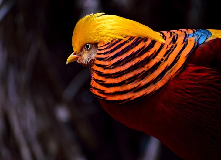 پرنده های بسیار عجیب جهان