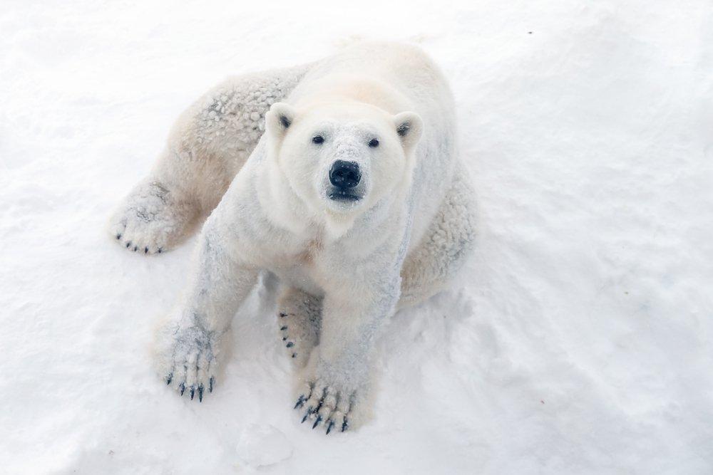 حیوانات وحشی و خطرناک کشور کانادا