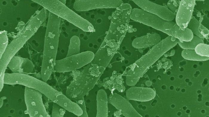 استفاده ارتش آمریکا از مهندسی ژنتیک برای دستکاری ژنوم ارگانیسم های دریایی با اهداف نظامی