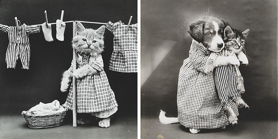 گشتی در «سرزمین گربه ها»؛ مجموعه عکسی کلاسیک از دنیای دوست داشتنی گربه ها