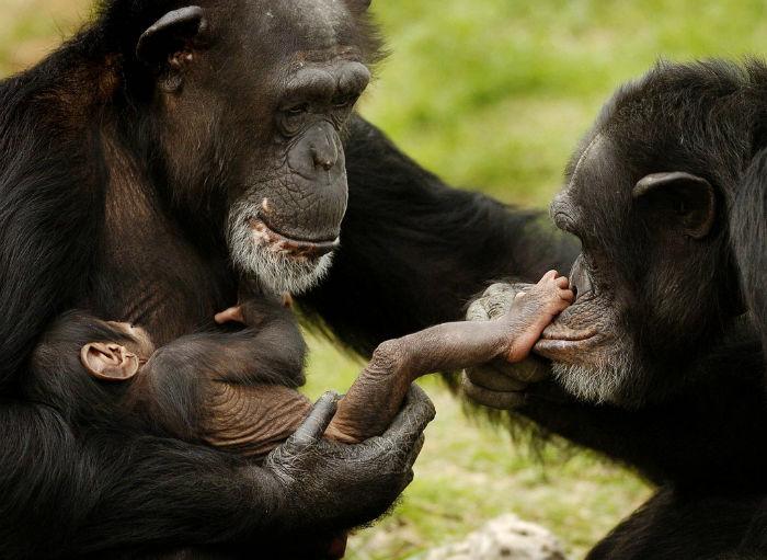 باهوش ترین جانوران