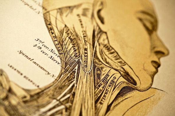 تاریخچه پر فراز و نشیب «کالبد شکافی»؛ از تشریح جسد «جولیوس سزار» تا «مایکل جکسون»