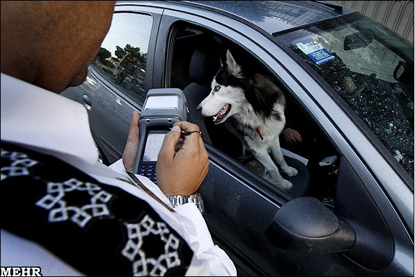 سگ گردانی در «تهران» هم ممنوع شد