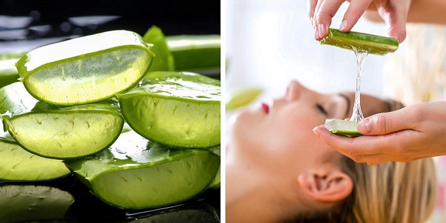 با کاربردهای درمانی و زیبایی گیاه پر خاصیت «آلوئه ورا» آشنا شوید