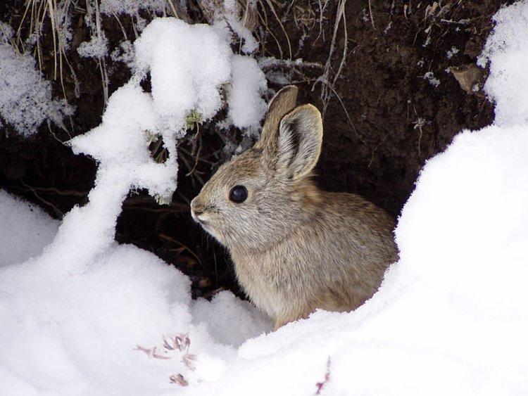 کوچک ترین حیوانات دنیا