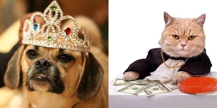 پشمالوهای میلیونر؛ با حیوانات خانگی آشنا شوید که ثروت عظیم صاحبانشان را به ارث بردند