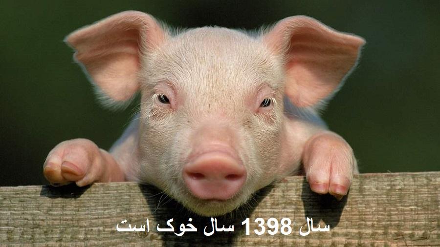 حیوان سال 98 خوک است