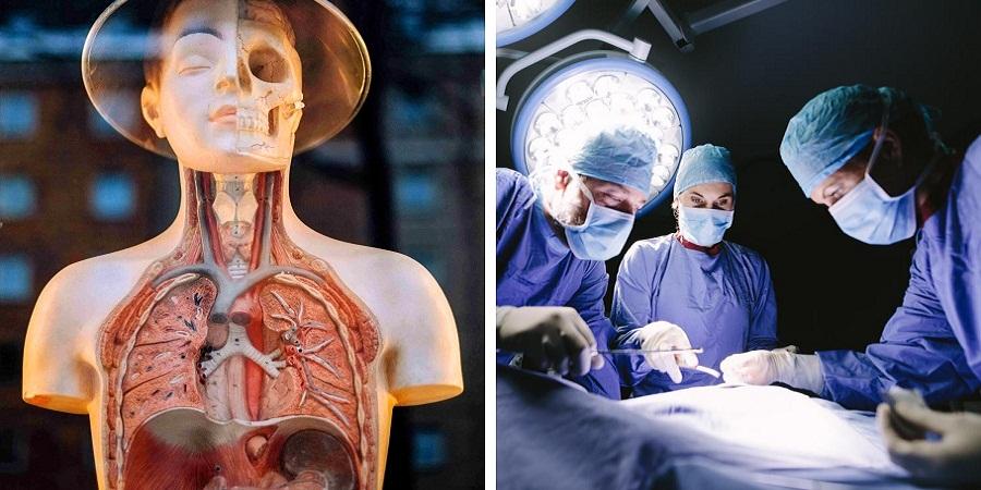 ۱۲ عضو مهم و اصلی بدن که بدون آن ها هم می توانید زنده بمانید؛ از ریه تا معده
