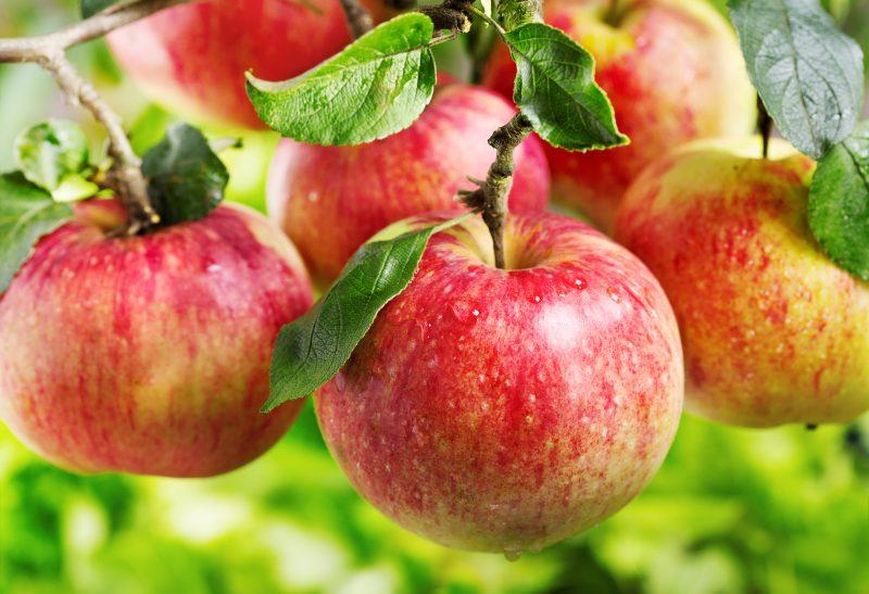 نحوه نگهداری انواع میوه ها