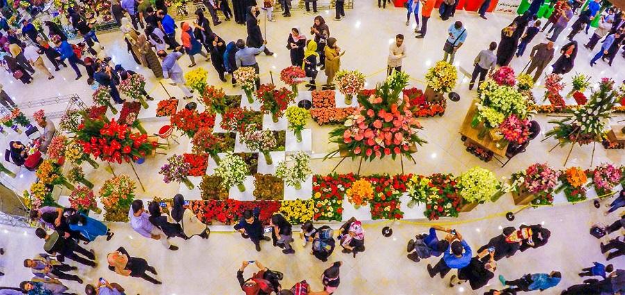 راهنمای خرید گیاهان آپارتمانی : نکاتی که باید حتما به آنها توجه کنید