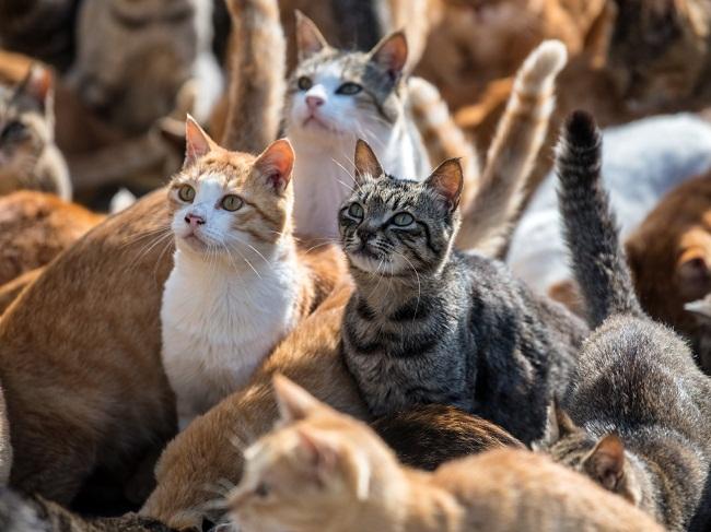 باورهای غلط درباره گربه ها