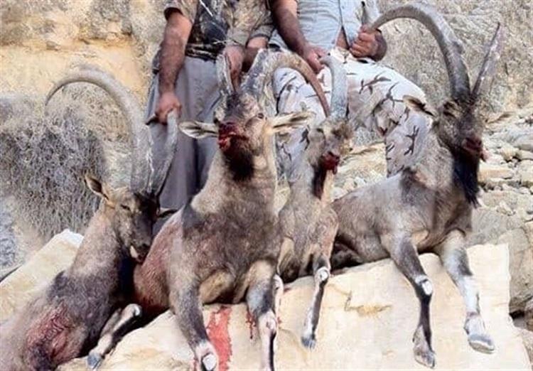 بزرگترین پرونده کشتار حیات وحش کشور فقط