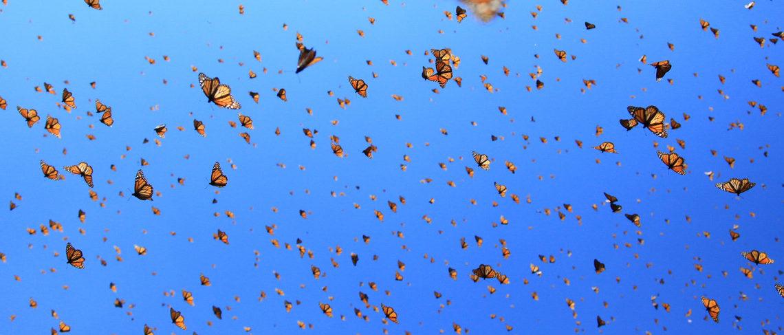 هجوم پروانه ها به تهران / پروانه رنگین بانو