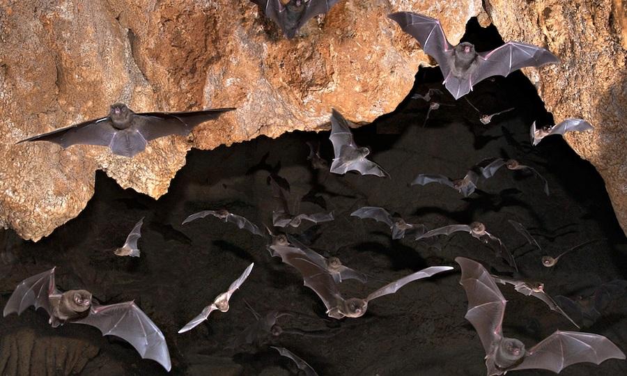 چرا خفاشها برعکس میخوابند؟