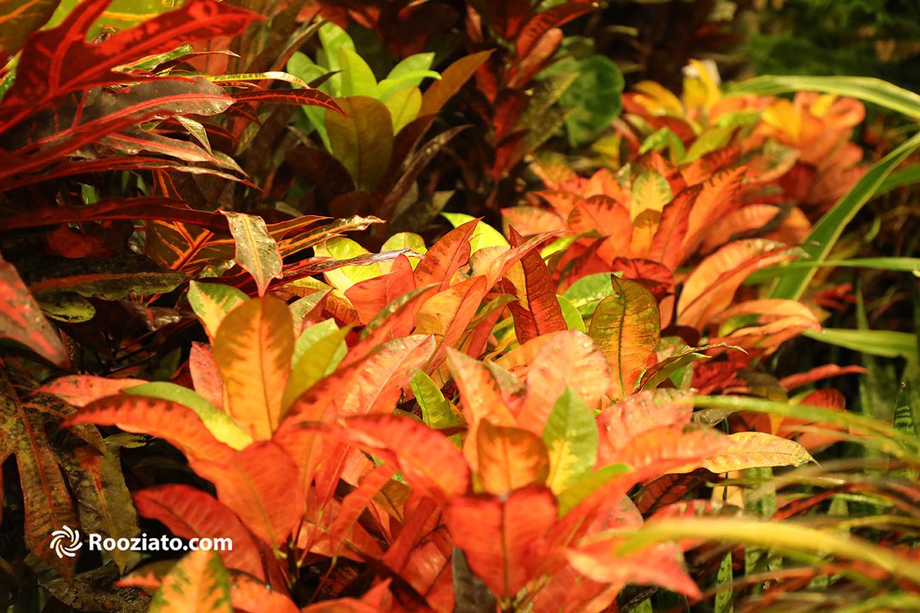 هفدهمین نمایشگاه بینالمللی گل و گیاه تهران