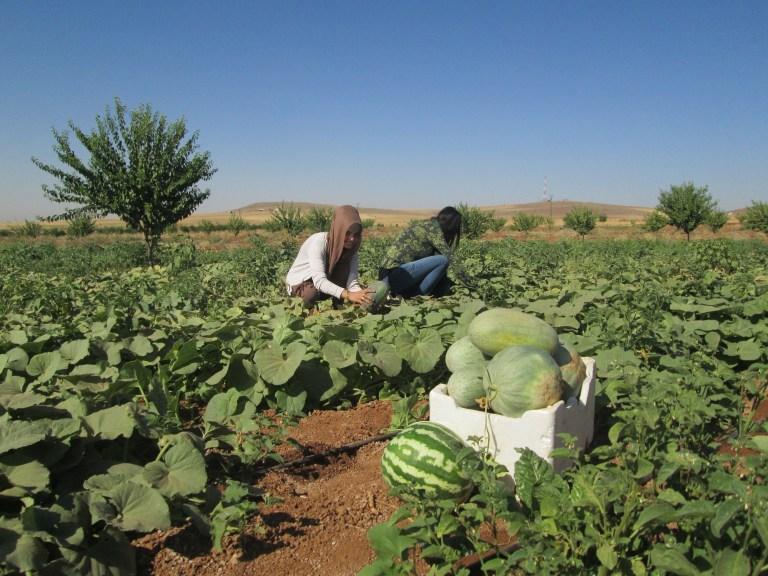 روستای زنانه ژنوار در کردستان سوریه