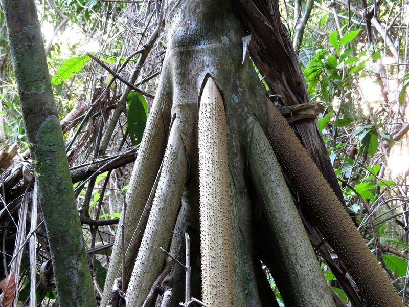 درختی که راه میرود