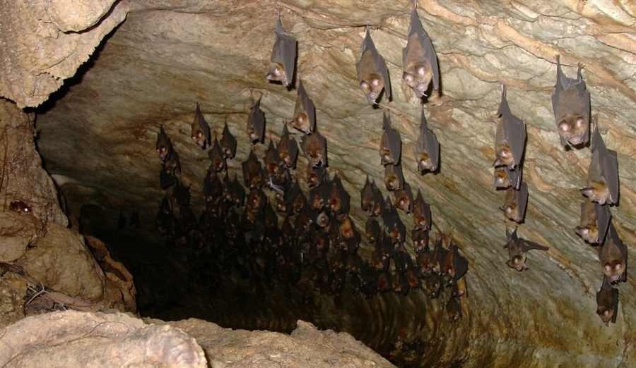غار خفاش ، غار صد هزار ساله پیش از میلاد در دهلران