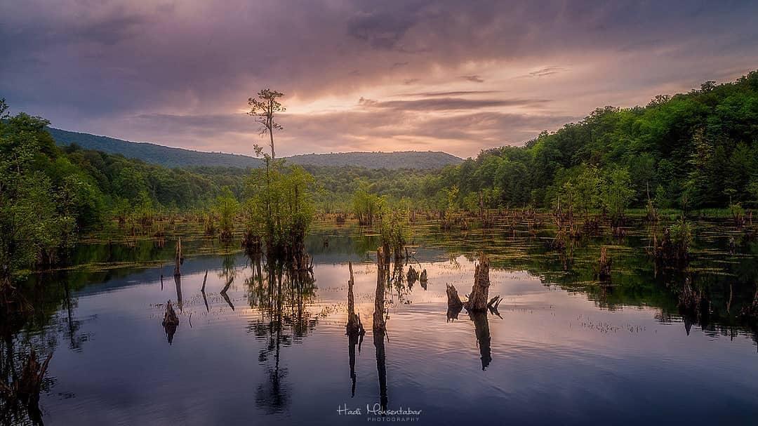 دریاچه ارواح ؛ مثلثی از درختان خشکیده، مه و زوزه حیوانات وحشی