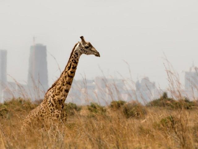 بلندترین حیوانات دنیا