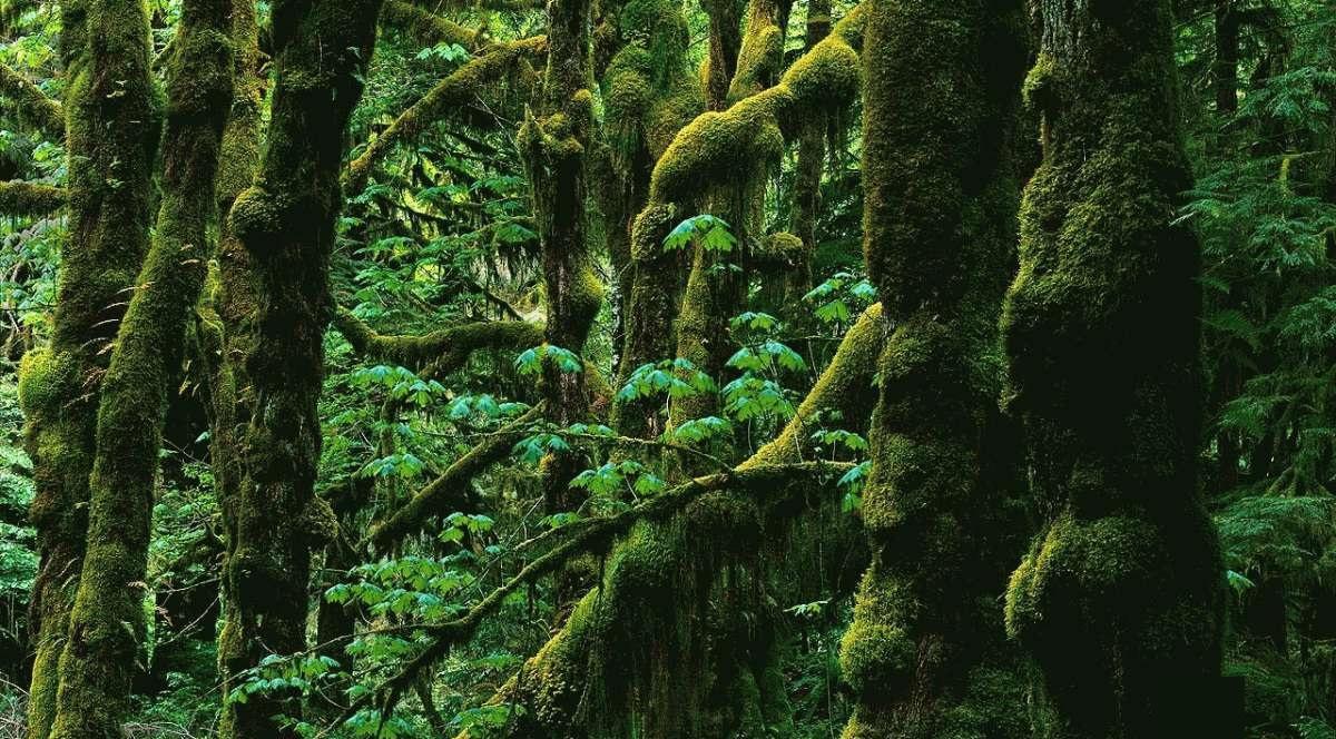 جنگلهای هیرکانی کجا هستند؟