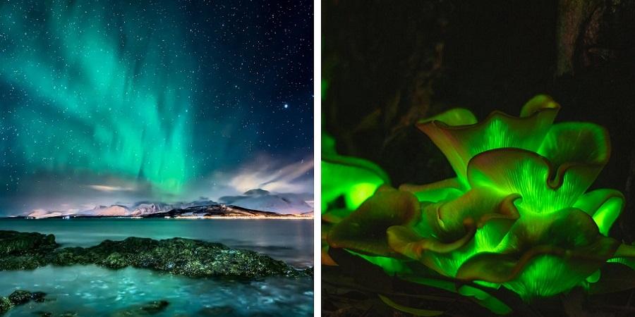 از شفق قطبی تا قارچ های شب تاب؛ نگاهی به درخشان ترین پدیده های طبیعی دنیا