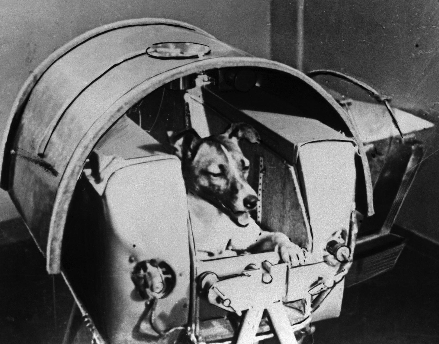 حیوانات فضانورد