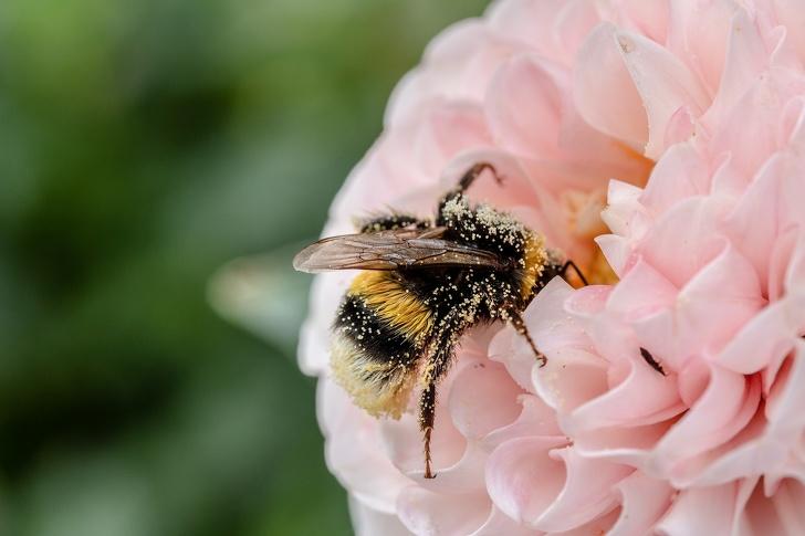 اهمیت زنبورها برای بقای انسان