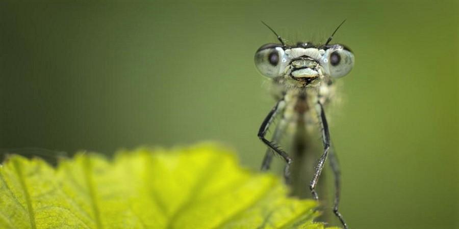 اگر تمام حشرات دنیا از بین بروند چه اتفاقی می افتد؟