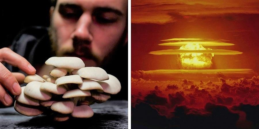 قارچ ها ناجیان ساکنان زمین در فجایع آخرالزمانی