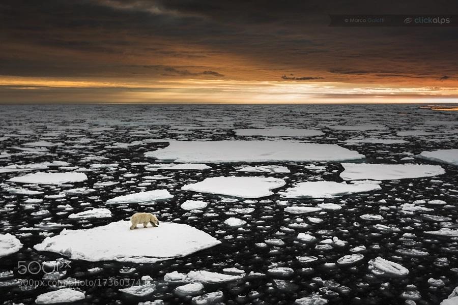 ذوب شدن یخچال های طبیعی زمین
