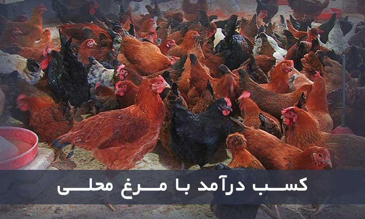 کسب درآمد از پرورش پرندگان