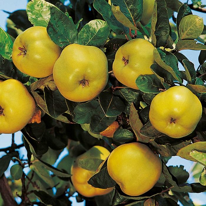فواید میوه به