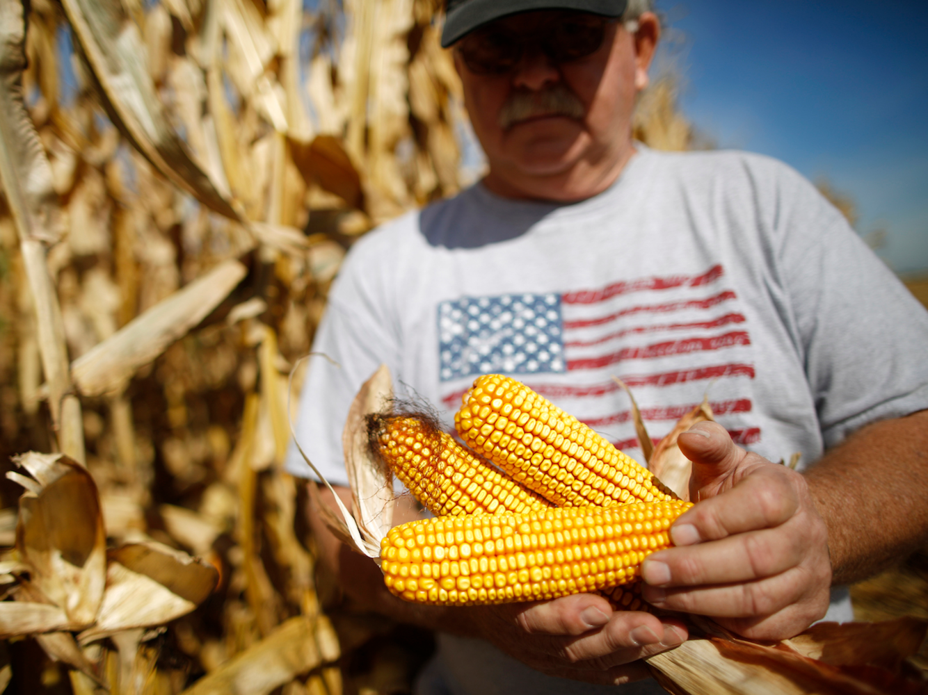 ۸ واقعیت جالب و خواندنی در مورد صنعت کشاورزی و دامداری در ایالات متحده