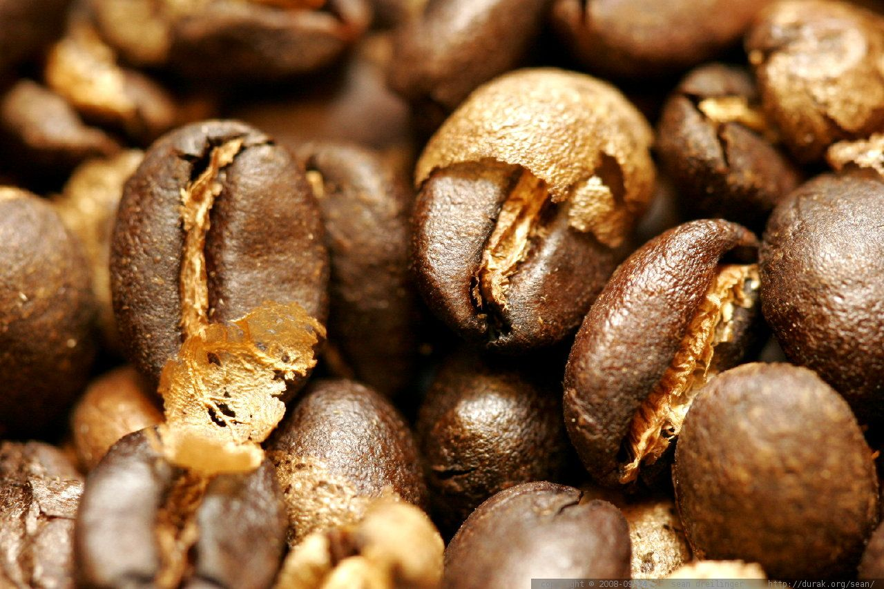 کمپانی خودروسازی فورد با قهوههای مکدونالد ماشین میسازد