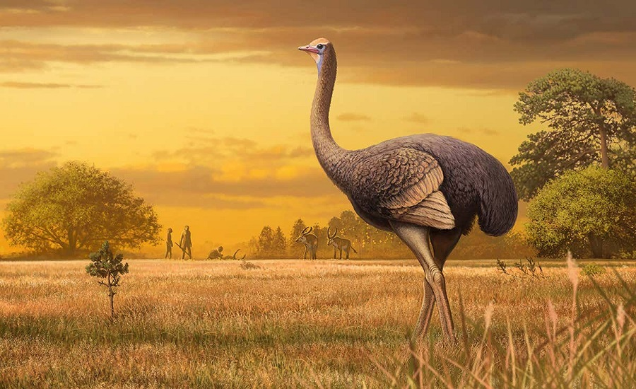 بزرگترین و خوفانگیزترین پرندگان روی زمین؛ از شترمرغ تا لکلک نیل