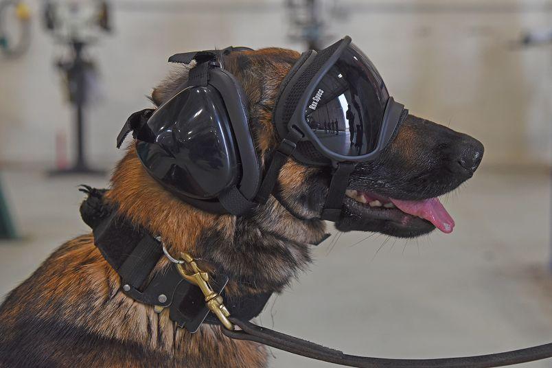 تکنولوژی Canine Auditory Protection System یا CAPS یک تکنولوژی محافظتی است که از شنوایی سگ های ارتش ایالات متحده محافظت می کند.